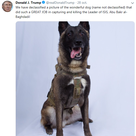 chien berger allemand malinois police nationale trump gendarmerie.png